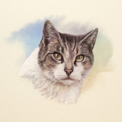 Cute cat face. Watercolor portrait of a cat. Drawing of a cat with yellow eyes executed in watercolor. Good for print T-shirt. Hand painted watercolor cat illustration. Art background, cover, card