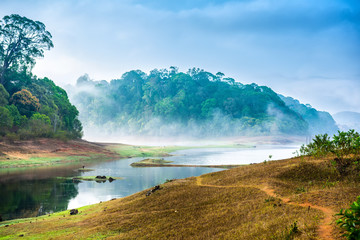 beautiful landscape with wild forest and river with fog in India. Periyar National Park, Kerala, India Fotomurales