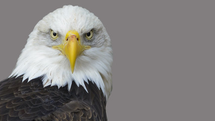 The head of the American eagle.