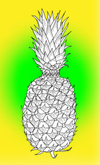 Pineapple hand drawn ink sketch on colorful background