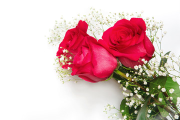 Beautiful red roses with gypsophila flowers on a white background