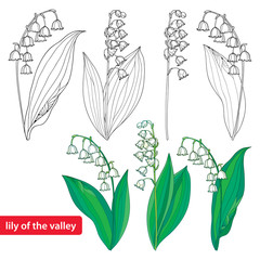 Vector set with outline Lily of the valley or Convallaria flowers and leaves isolated on white. Template with ornate floral element for spring design or coloring book. Early lily in contour style.