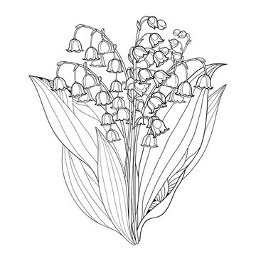 Vector bouquet with outline Lily of the valley or Convallaria flowers and leaves isolated on white. Ornate floral element for spring design or coloring book. Bunch of may lily flower in contour style.
