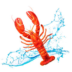 Red lobster with water splashes