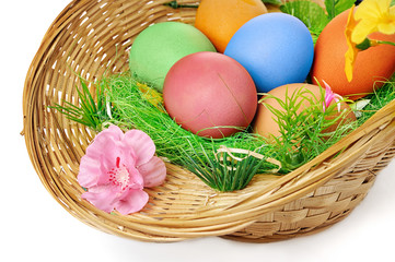 easter eggs in basket isolated on a white background