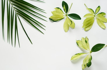 green yellow leaf, palm branches on white background. flat lay, top view.abstact