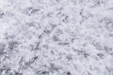 Background texture of soft white feathers