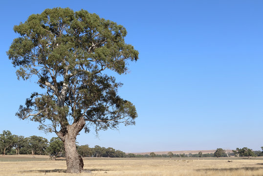 Australian Outback image with copy space