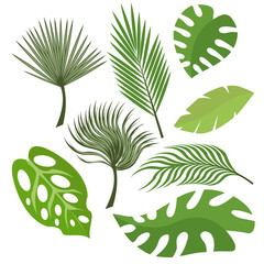 Set of exotic leaves from palm trees or tropical trees. Vector, illustration in flat style isolated on white background EPS10