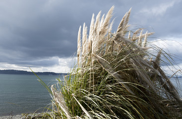 Beach grass in the sun with clouds