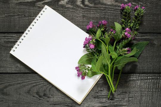 Medicinal plant comfrey (Symphytum officinale) and notebook
