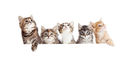 Row of Cute Kittens Hanging Over White Banner