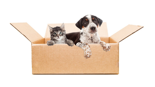 Puppy and Kitten in cardboard box