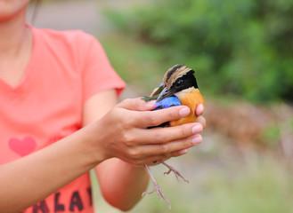 Fototapeta Bird relinquish, bird in lady hands