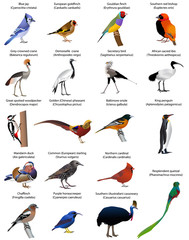 Collection of different species of birds. Colour vector.