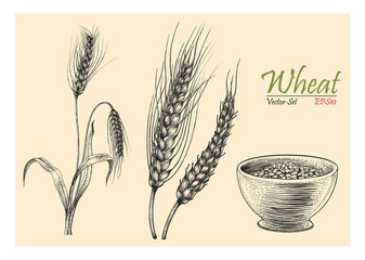 Wheat vector set hand drawing vintage style