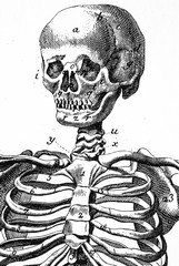Human skull, vintage illustration