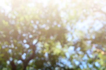 tree green bokeh background blurred abstract
