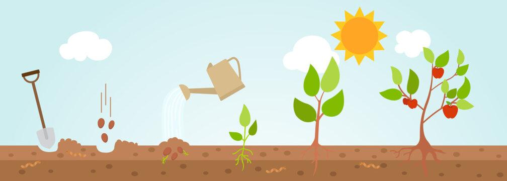 Tree growth diagram.illustration.