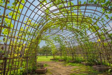 vegetable zucchini garden.