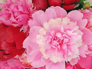 Beautiful peony flowers background