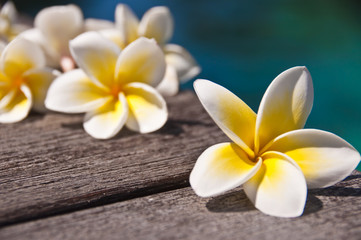 Plumeria flowers on wooden floor, blue water background