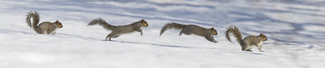 Running Squirrel panorama