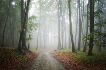 road through misty forest background