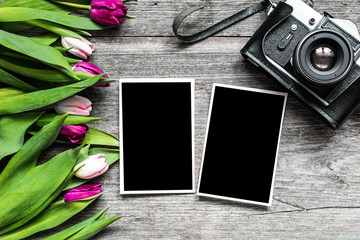 vintage retro camera with blank photo frames and purple tulip flowers