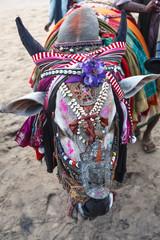 Decorated cow, Goa, India.