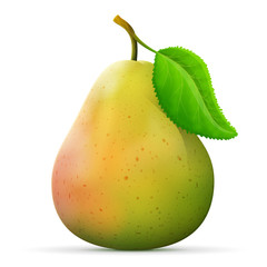 Single pear fruit close up. Raw pear with leaf isolated on white background. Qualitative vector illustration about pears, agriculture, fruits, cooking, food, gastronomy, etc