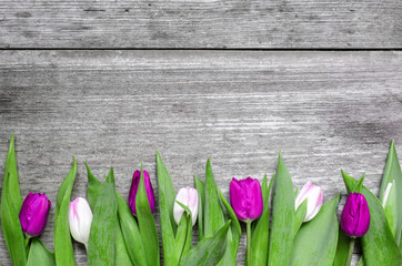 purple and pink tulips over rustic wooden background.