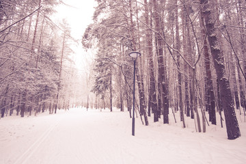 Photo of winter snow forest