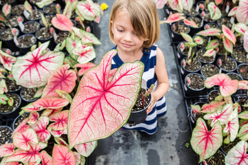 Girl holding elephant ear plant