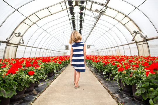 Rear view of girl in greenhouse of geraniums