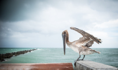 Bird at South Pointe Pier Miami