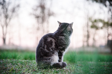 cat sitting on the grass