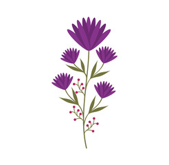 cute flower carden isolated icon vector illustration design