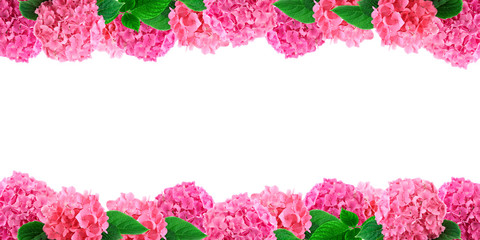 Pink hortensia flowers frame on white. Hydrangea flower background with free space for text