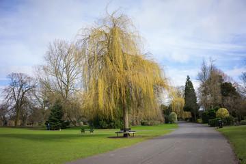Park setting at springtime.