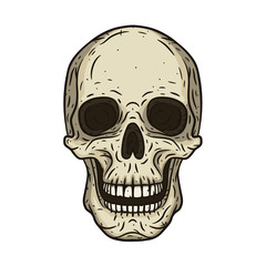 Vector illustration of human skull in hand drawn style.