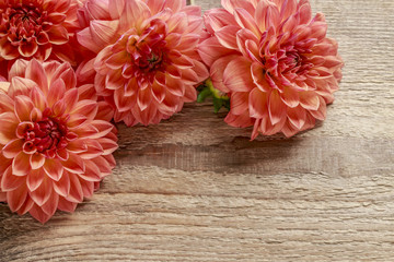 Cadres-photo bureau Dahlia Orange dahlia flowers on wood