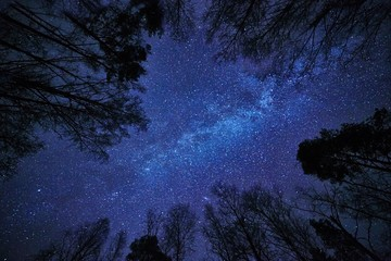 Aluminium Prints Night Night sky with the Milky Way over the forest and trees surrounding the scene.