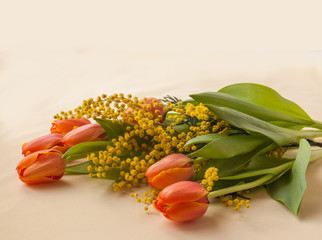 Mimosa and red tulips