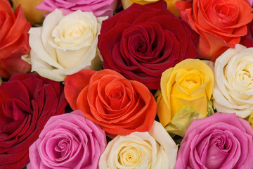 Closeup of a bunch of multicolored roses background