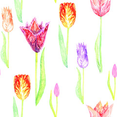 Tulip variety with leaves, seamless pattern design hand painted watercolor illustration
