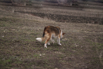 одинокая собака