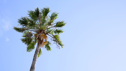 One palm tree on blue sky background. The bottom view, copy space.