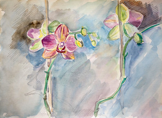 Sketch drawing pink Orchids watercolor and graphite pencil