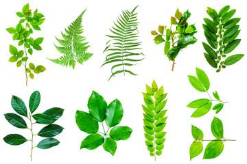 leaf nature isolate